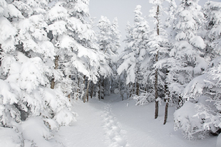 View New Hampshire forest landscape images