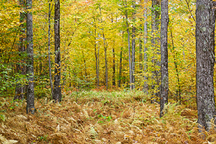 View New Hampshire forest landscape images