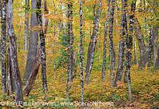 Foliage Update – New Hampshire