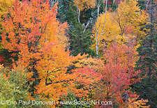 New Hampshire Foliage Report