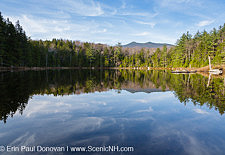 Black Pond - Lincoln, New Hampshire