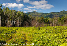 Controlled Forest Burn - White Mountains, New Hampshire USA