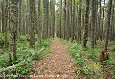 Pemigewasset Wilderness - White Mountains, New Hampshire