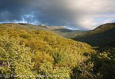 Lafayette Brook Scenic Area - White Mountains, New Hampshire USA