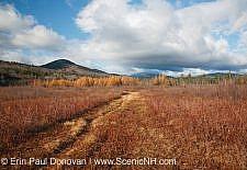 Downes - Oliverian Brook Ski Trail - White Mountains, New Hampshire USA