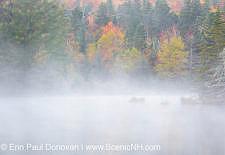 Wildlife Pond - Bethlehem, New Hampshire USA