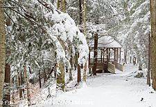 Roaring River Memorial Nature Trail - Franconia Notch, New Hampshire