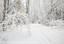 Lincoln Woods Trail, Winter - Lincoln, New Hampshire