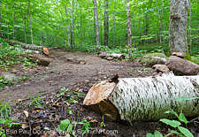 Low impact trail work - Freshly cut blowdown along the Mt Kinsman Trail in the White Mountains, New Hampshire USA
