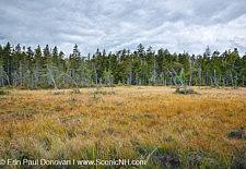 Pemigewasset Wilderness - White Mountains, NH