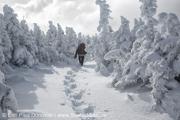 Winter Forest Scenes New Hampshire White Mountains