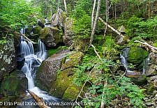 Snyder Brook - Low and Burbank's Grant, New Hampshire