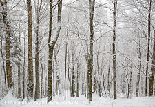 Lafayette Brook Scenic Area - Franconia, New Hampshire USA