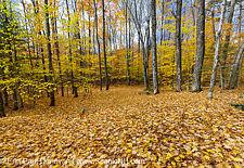 Thornton Gore Road - Thornton, New Hampshire