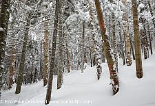 Mount Jim - Kinsman Notch, New Hampshire USA