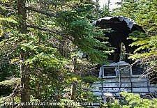 Mount Success - 1954 Douglas DC-3 Plane Crash
