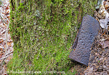 Logging Camp - Sawyer River Railroad, New Hampshire