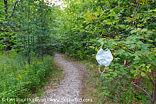 Georgiana Falls Path - Lincoln, New Hampshire